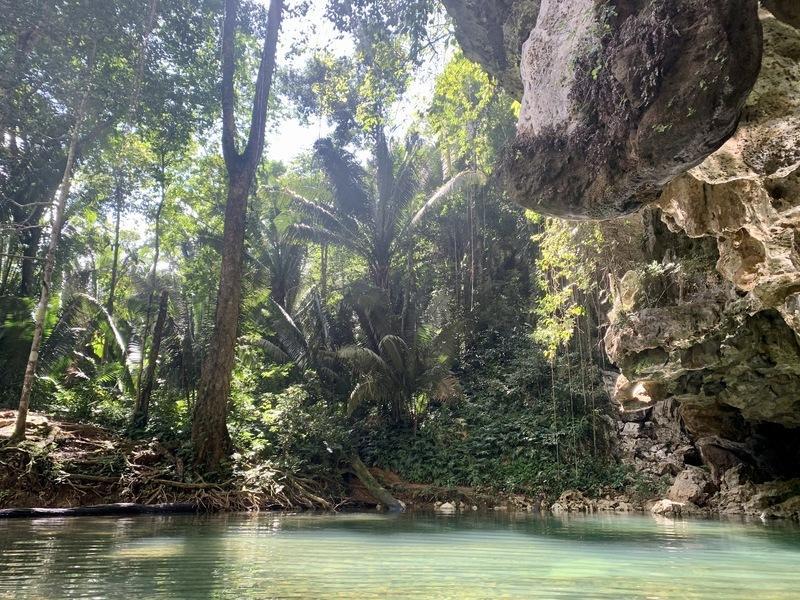Belizean jungle