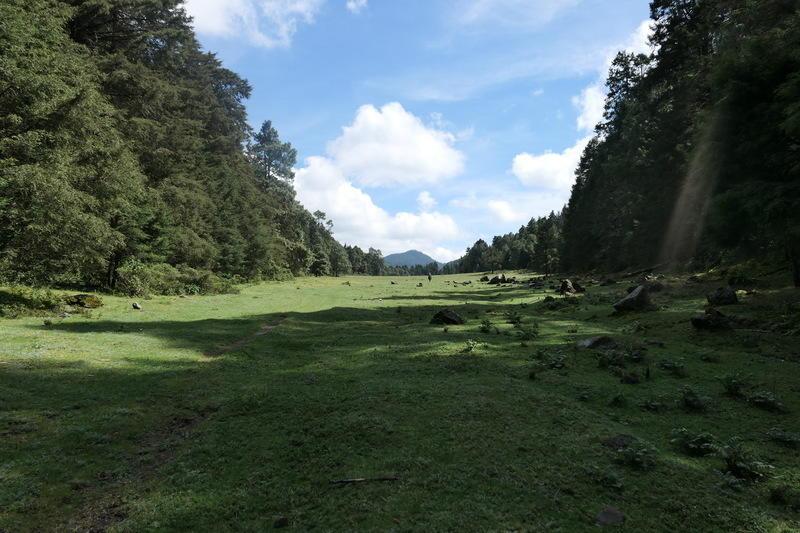 The field near the top of Cerro Pelón