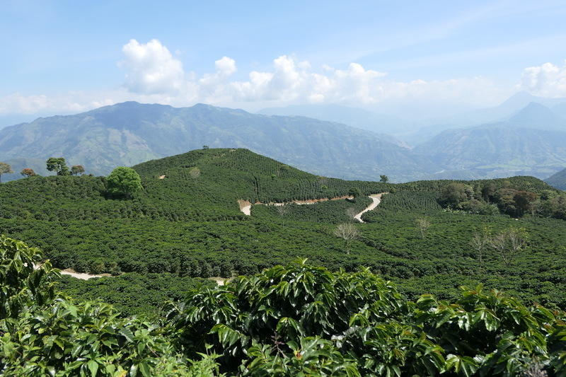 A coffee farm with a view