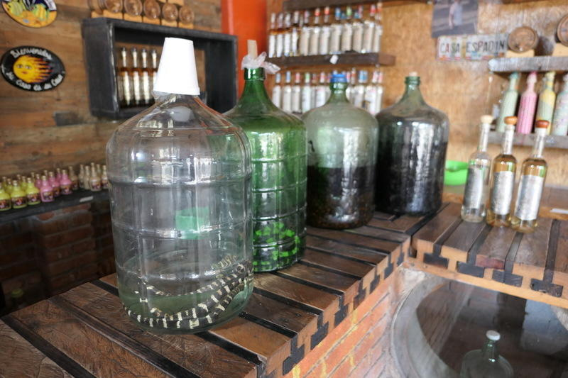 Jugs of mezcal with snakes