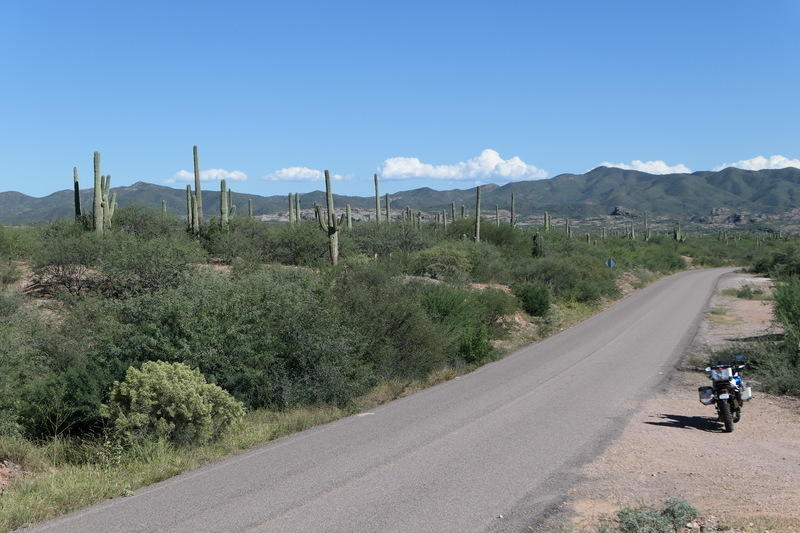 A becacticled road in Sonora