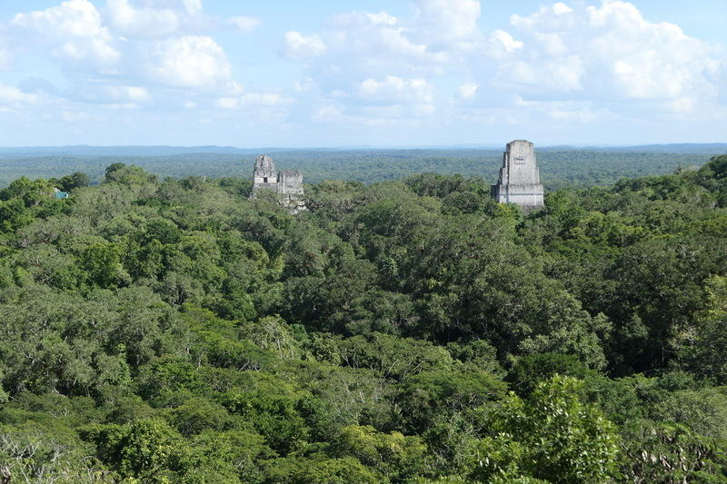 Tikal temples popping up above the jungle